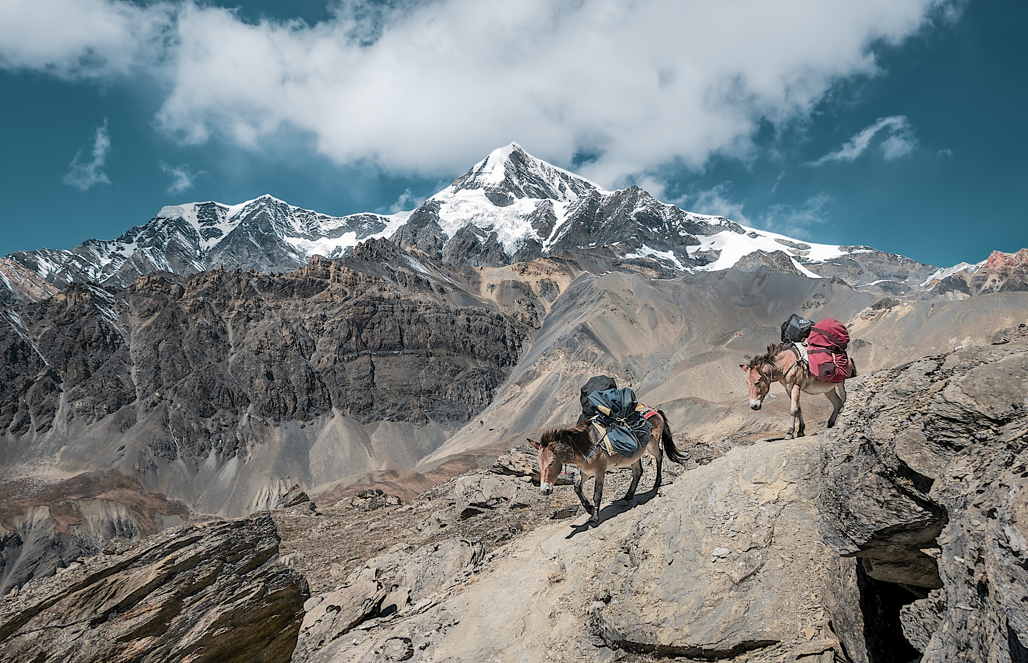 Donkeys in the Cordillera Blanca